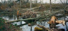 Schaden vermeiden: Globalisierte Katastrophen managen | Nachricht | finanzen.net