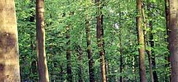 Rohstoff Holz: Wirtschaftsfaktor Holz: Über die steigende Popularität | Nachricht | finanzen.net