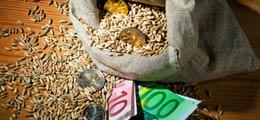 «Ситуация критическая»: На юге России может погибнуть 80% посевов зерна