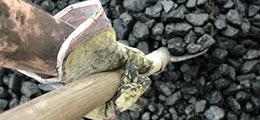 919218 3190091 coal