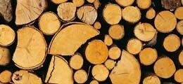 Mittelstandsanleihen: Homann Holzwerkstoffe: Holzauge, sei wachsam | Nachricht | finanzen.net