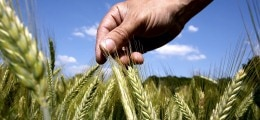 Spekulationsobjekt Agrarland: Verband: Spekulanten treiben Preise für Agrarland hoch | Nachricht | finanzen.net