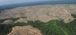 Вывоз российского леса в Китай достиг нового рекорда