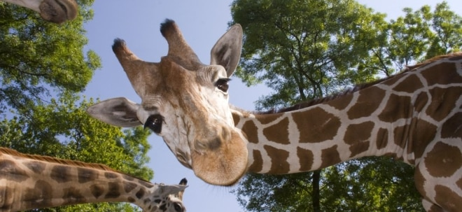 Ehrgeizige Pläne: Namibia: Mehr als Safari-Tourismus | Nachricht | finanzen.net