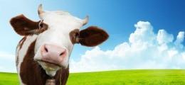 Fünf Cent mehr je Liter: Milch wird voraussichtlich teurer | Nachricht | finanzen.net