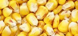 Agrarrohstoffe: Maismarkt: Mais ist wieder heiß | Nachricht | finanzen.net