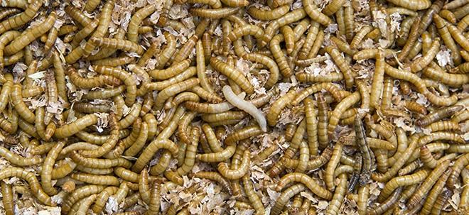 Business Insider: Diese Mehlwürmer fressen Plastik - und lösen so unser Müllproblem   Nachricht   finanzen.net