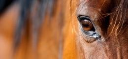 Pferdefleisch-Skandal: Spuren von Pferdefleisch bei deutschem Hersteller | Nachricht | finanzen.net