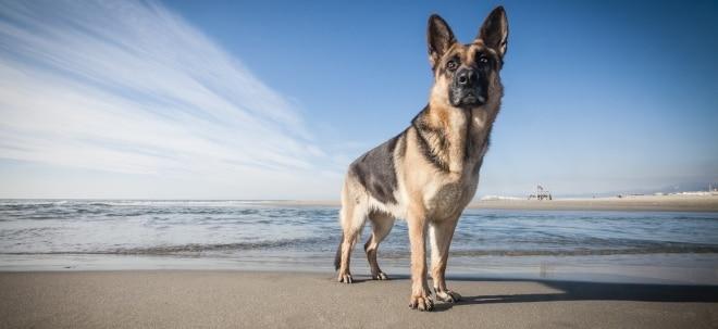 Aktien im Fokus: Tierische Gewinne: Wer am Vierbeiner-Boom prächtig verdient | Nachricht | finanzen.net