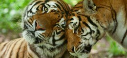 Indonesien: Tigerstaat auf dem Sprung | Nachricht | finanzen.net
