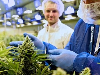 : The cannabis producer Tilray is deploying a 'risky strategy' to expand globally (TLRY)