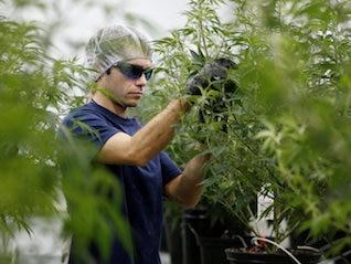 : Canopy Growth will be the biggest winner in Canada's $9 billion marijuana market (CGC)