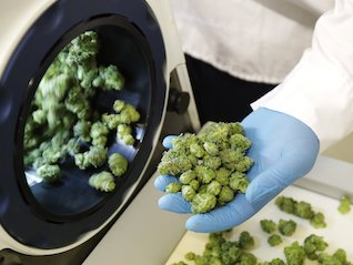 : Cannabis producer Tilray misses on both sales and earnings (TLRY)