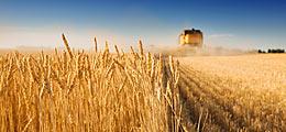 Agrarkonzerne gefragt: Glencore & Co: Kampf ums Weizenlager | Nachricht | finanzen.net