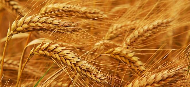 Weizenpreis fällt: Weizen so billig wie seit 10 Jahren nicht | Nachricht | finanzen.net