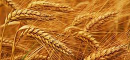 Rohstoffpreise 2012: Getreide hoch, Kohle runter | Nachricht | finanzen.net